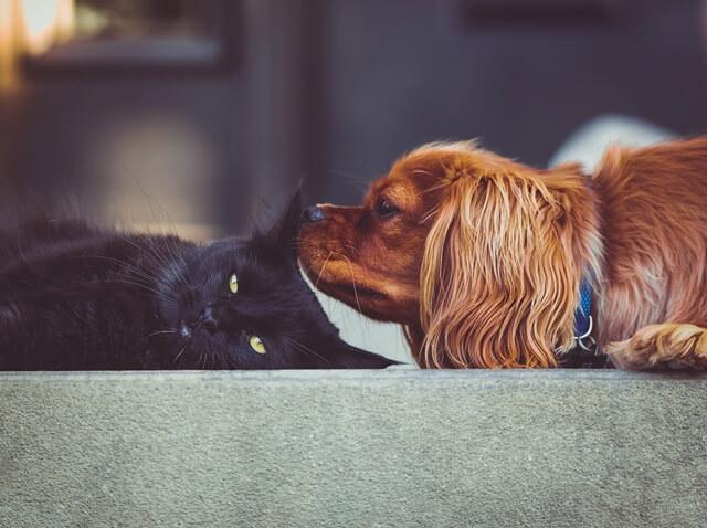 קרציה בכלב ובחתול