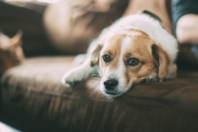 חשוב לשים לכלב קולר קרציות
