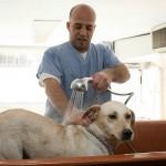 וטרינר מקלח כלב