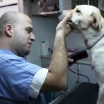 בדיקות עם מכשור מתקדם לכלבים