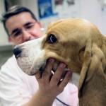 וטרינר עורך טיפול שיניים לכלב