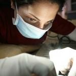 צוות המרכז הרפואי לחיות מבצע ניתוח לכלב