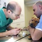 וטרינרים מטפלים בכף רגל פצועה של כלב