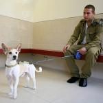 חייל מחכה עם הכלב
