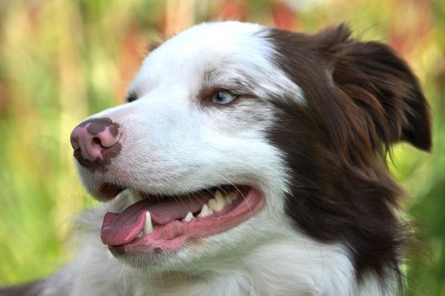 תמונה עם כלב שרואים בה שיניים