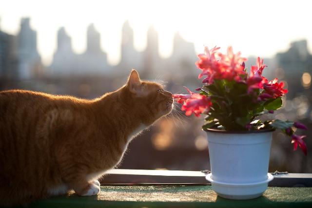 חתול בית על עדן החלון