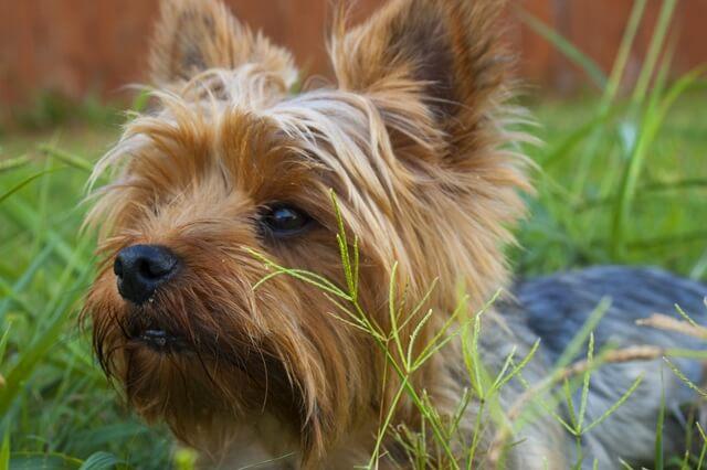 צמחייה וקרציות בסביבת הכלב