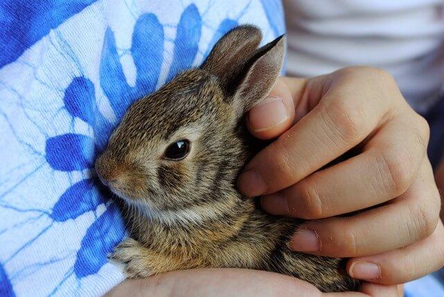 ארנב מחמד