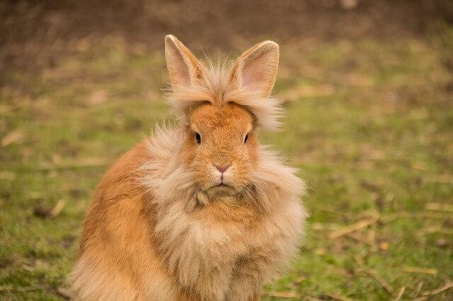 ארנבון ראש אריב