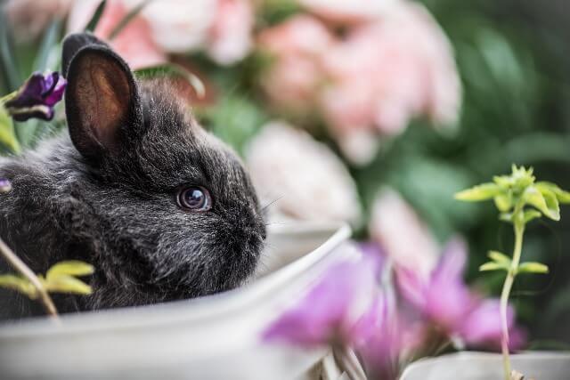 גידול ארנבון