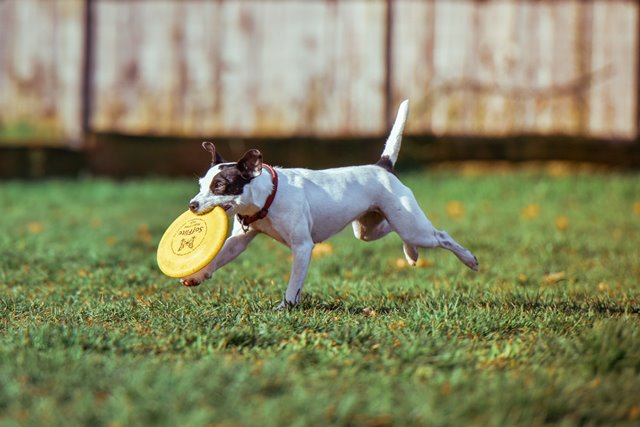 אילוף ומשחק עם הכלב