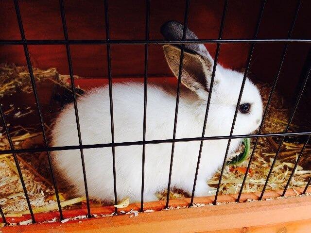 ארנבון בכלוב