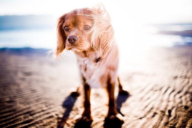 כלב בשמש בקיץ