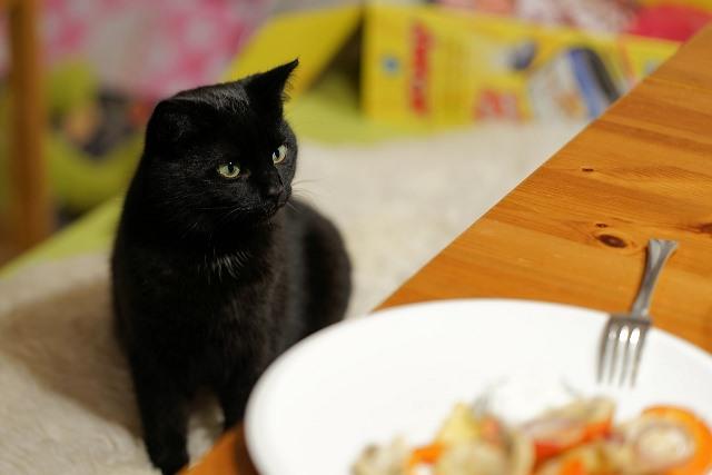 האם מותר לתת לחתול סלט