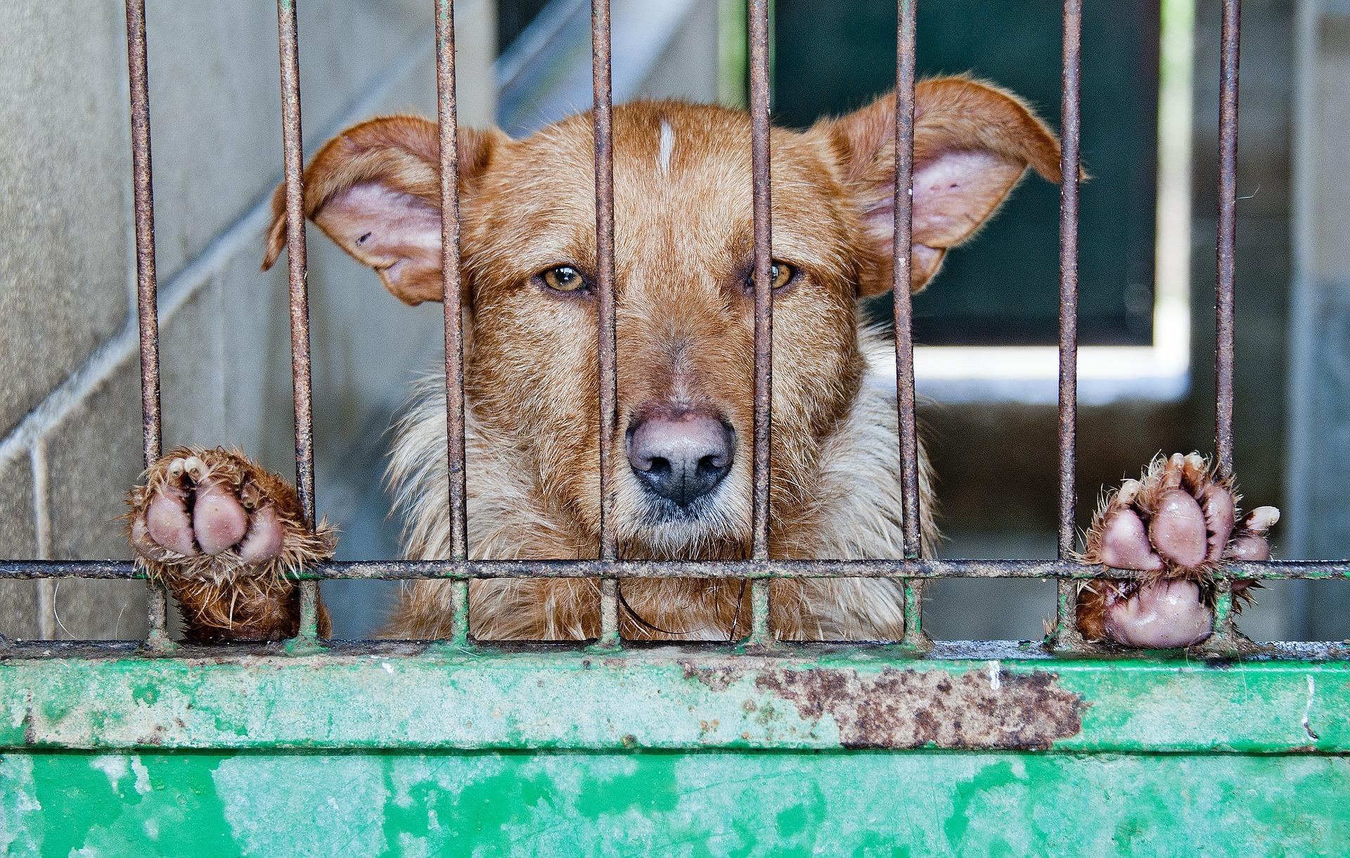 כלב במכלאה בגלל פקודת הכלבת