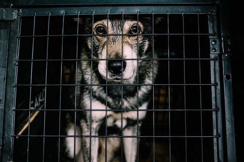 כלב בהסגר כלבים