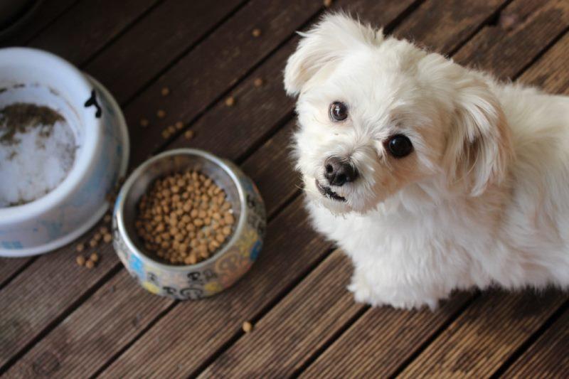 כלב מסרב לאכול